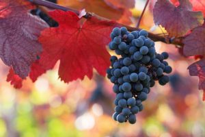 Free Wine Tasting - Fall Reds @ Vinos on Galt